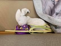 palm_sunday_rabbit