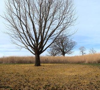 november_branches
